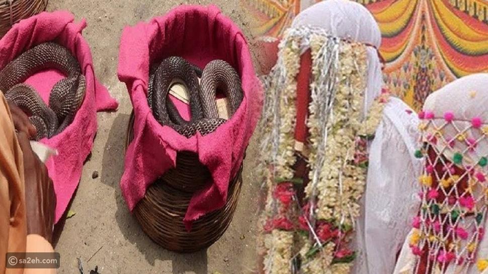 التقليد الأغرب على الإطلاق: الثعابين مهر الزواج في هذا المجتمع الهندي