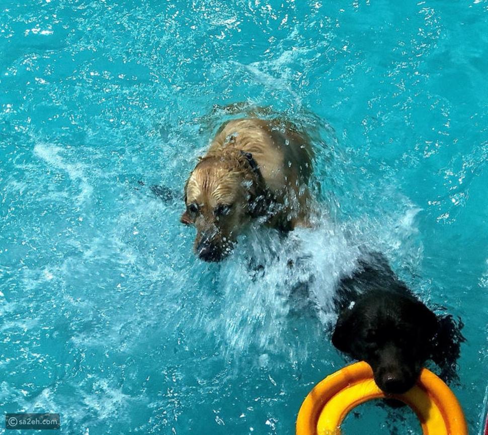حلم كل كلب: دبي تقدم أول متنزه مائي للكلاب
