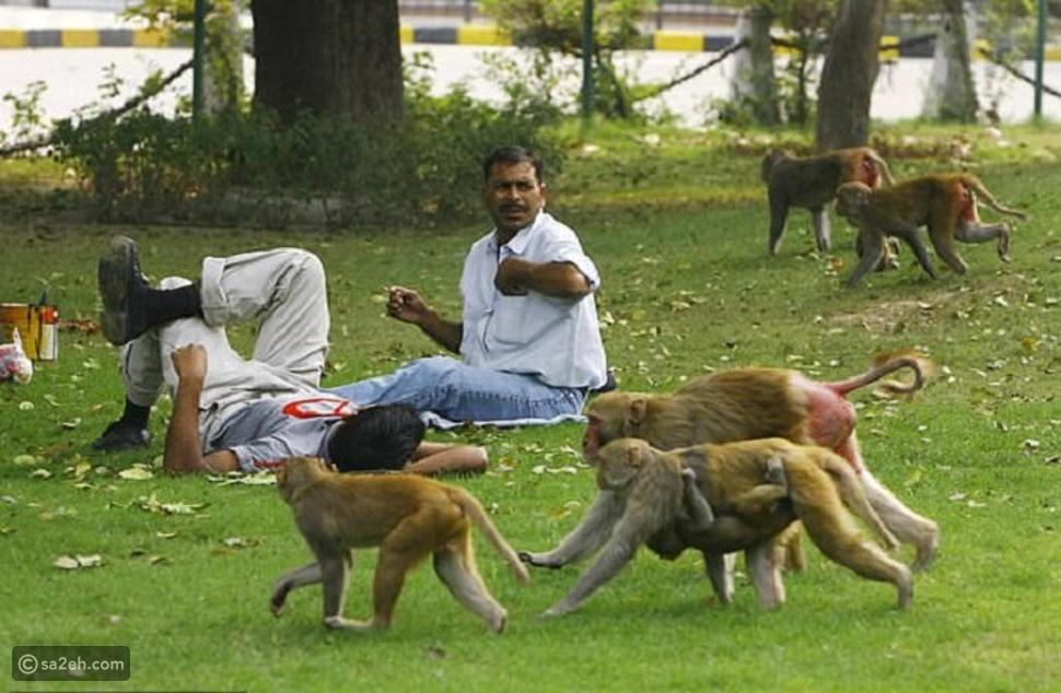 القرود تهاجم قرية هندية وتجبر سكانها على المغادرة