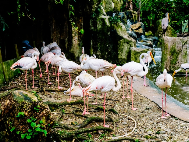 يمكن للطيور التحليق بحرية ضمن مساحات شاسعة في الحديقة