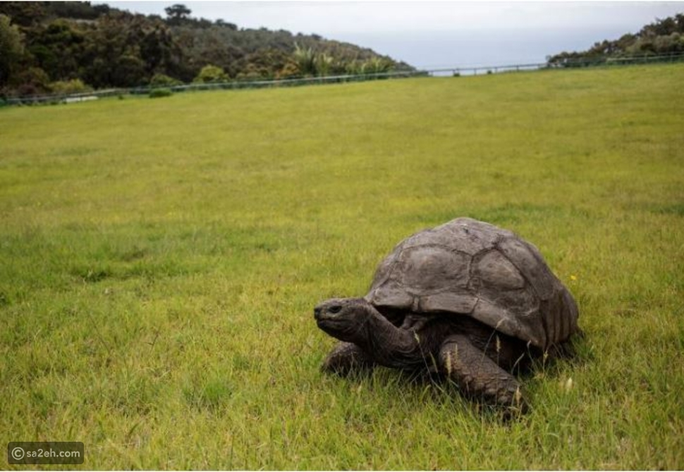 لعشاق السفر حول العالم: 10 من أقدم الكائنات الحية على الأرض تعرف عليها