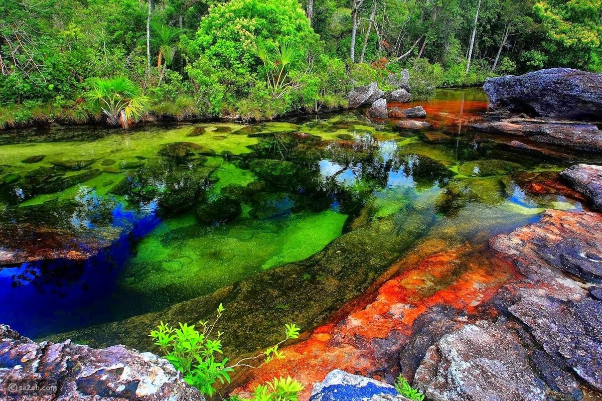 أجمل أنهار العالم: كانو كريستال ذو الخمسة ألوان الذي هرب من الجنة - سائح