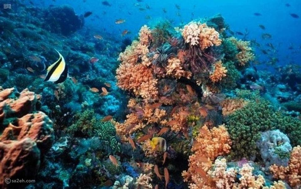 يحاكي أعماق البحار: تعرف على أكبر متحف مائي في السعودية