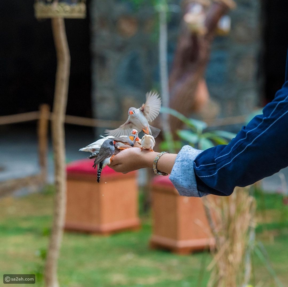 محمية الأوسية للطيور: تجربة سياحية لم ترها المدينة المنورة من قبل