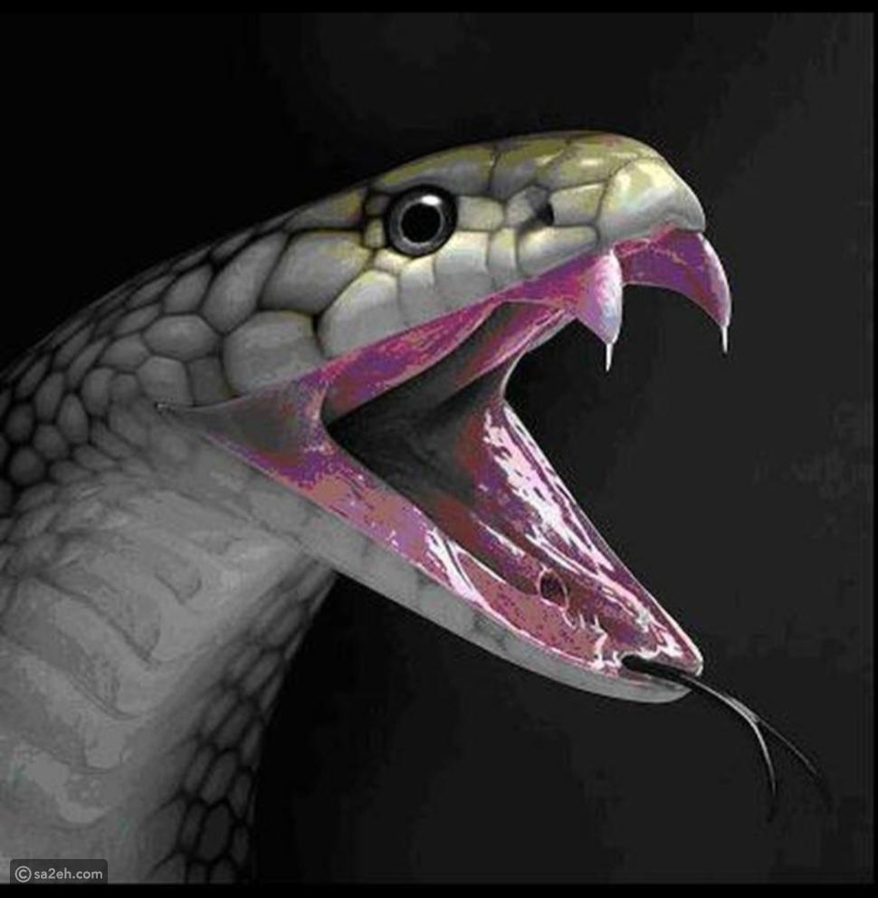 من أفعى ضاحكة إلى طائر عابس ومشاهد و تصرفات مدهشة من عالم الحيوانات