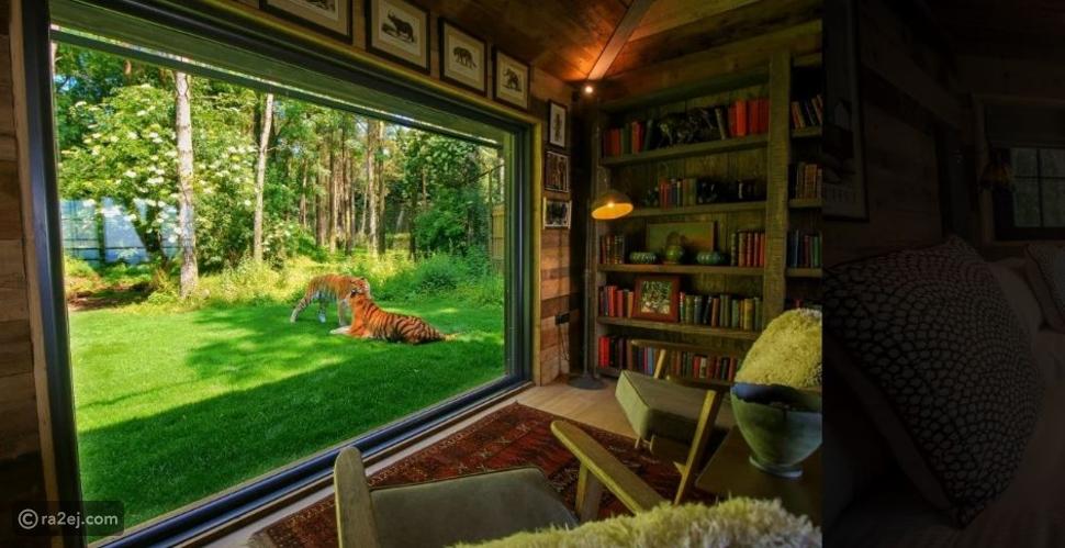 شاهد: في هذا المكان يمكنك قضاء ليلة آمنة بالقرب من الأسود والنمور