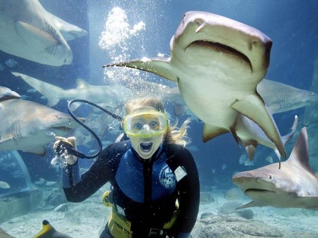 شاهد اسماك القرش عن قرب خلال جولاتك السياحية